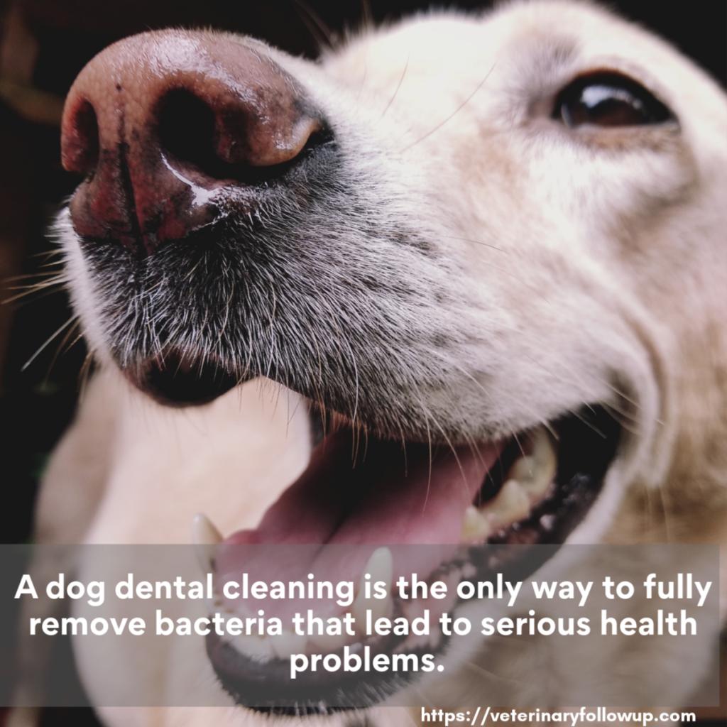 Dog Dental Cleaning