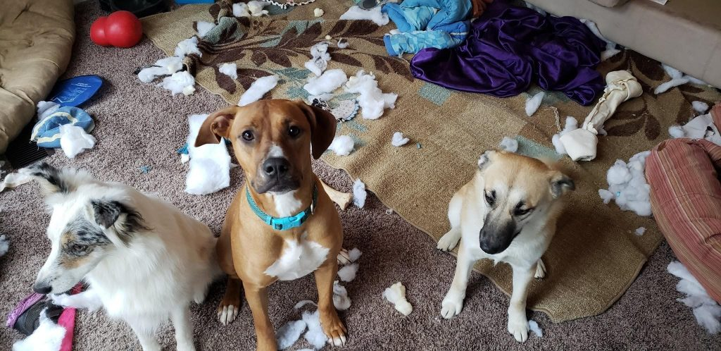 Dog Enrichment Activities. Tired of coming homes to scenes like this one?