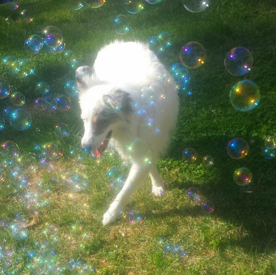 Dog Enrichment Playing with Bubbles.