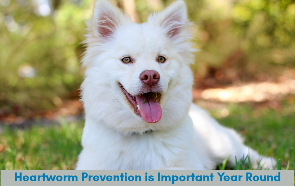 Heartworm Prevention is Important Year Round