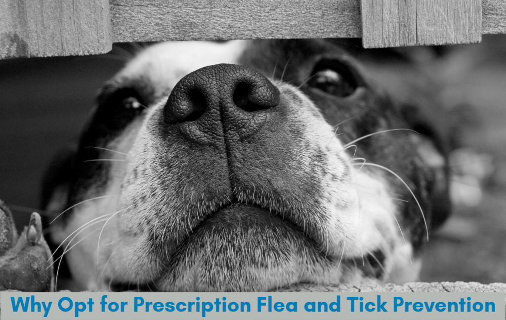 Prescription Flea and Tick Prevention is the most robust option for your dog
