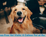 Stress-Free Vet Visits: A Calmer Pet at the Vet