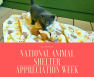 National Animal Shelter Appreciation Week