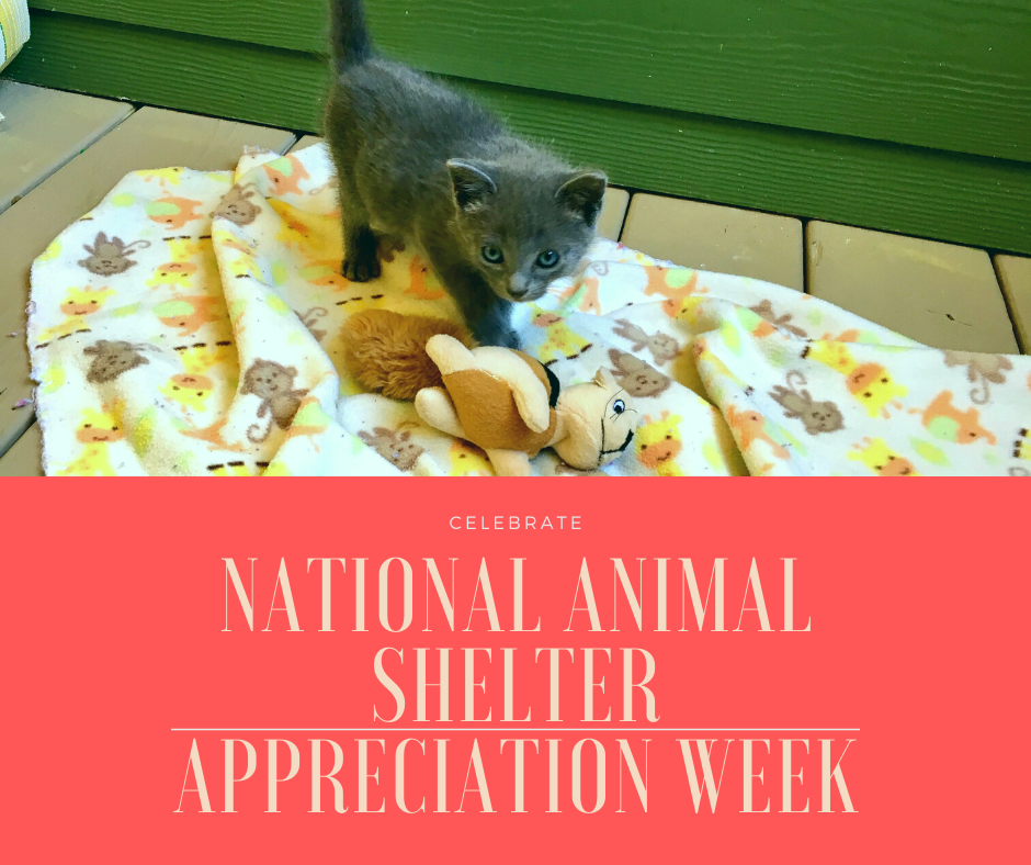Celebrate national animal shelter appreciation week