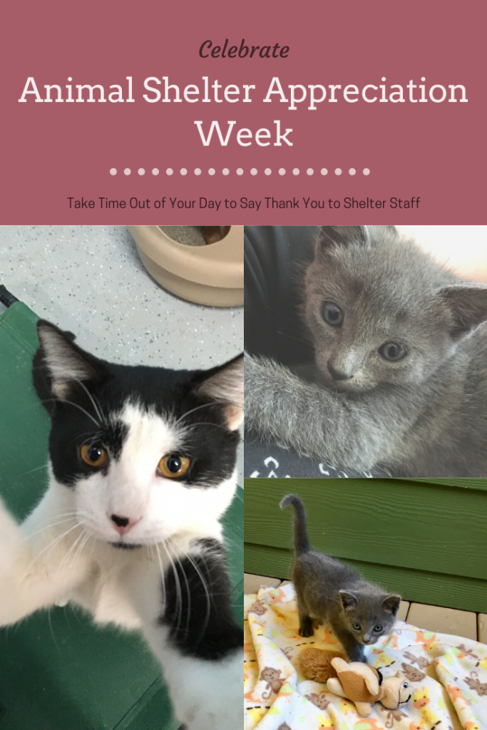 Animal Shelter Appreciation Week with Kittens